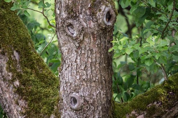 tree-2927282_640
