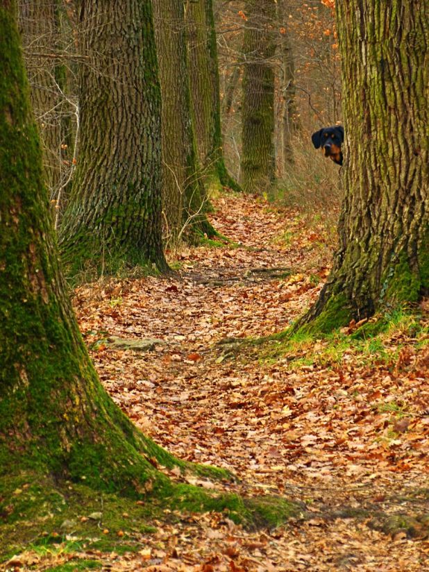 900px-hide_and_seek_-_panoramio