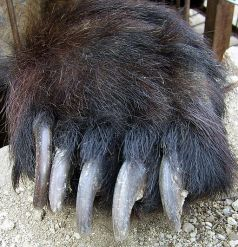 bear claws